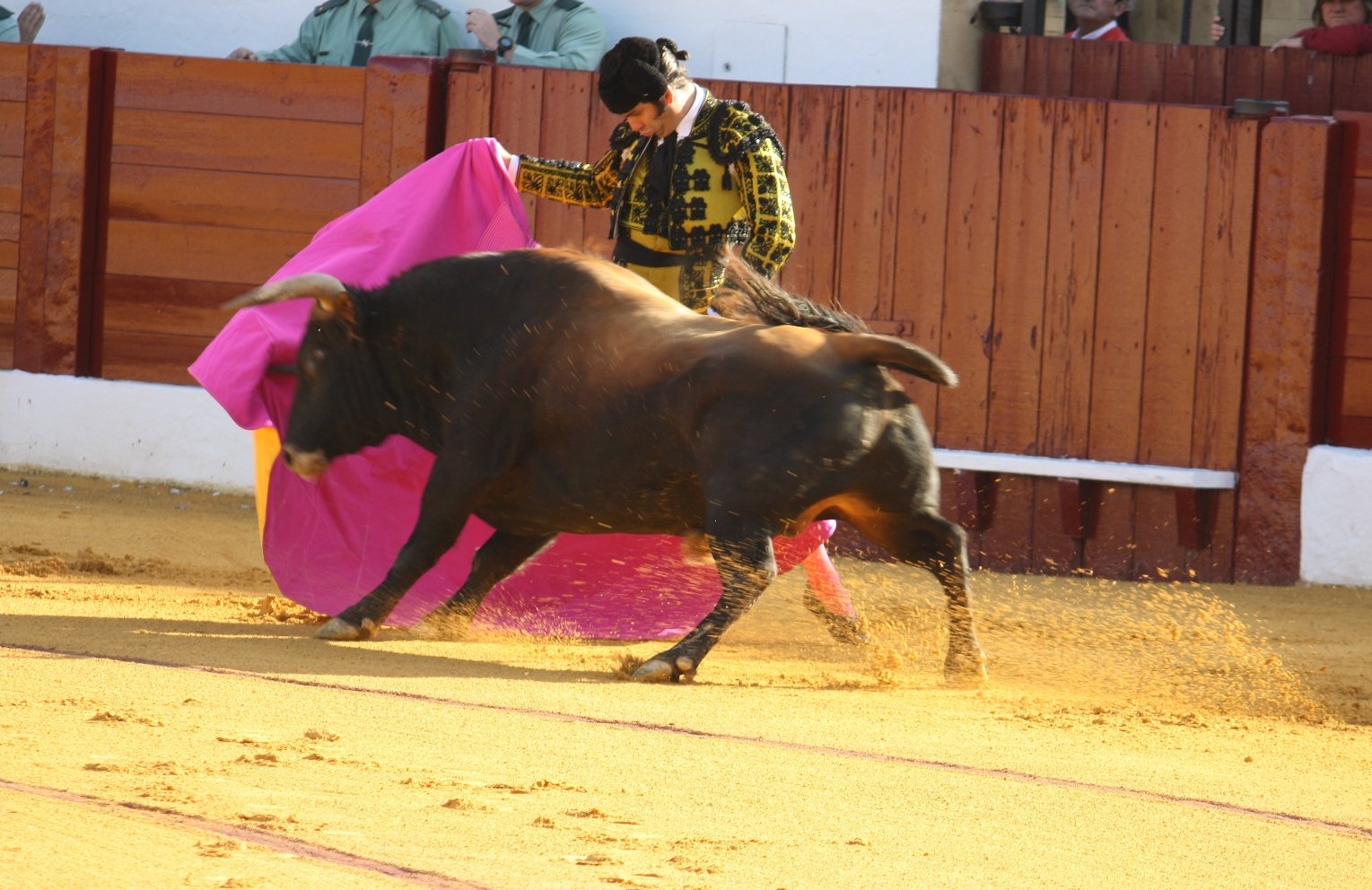 The Bullfight and the Ban  and the Spanish Economy    The Last Arena Public Radio International