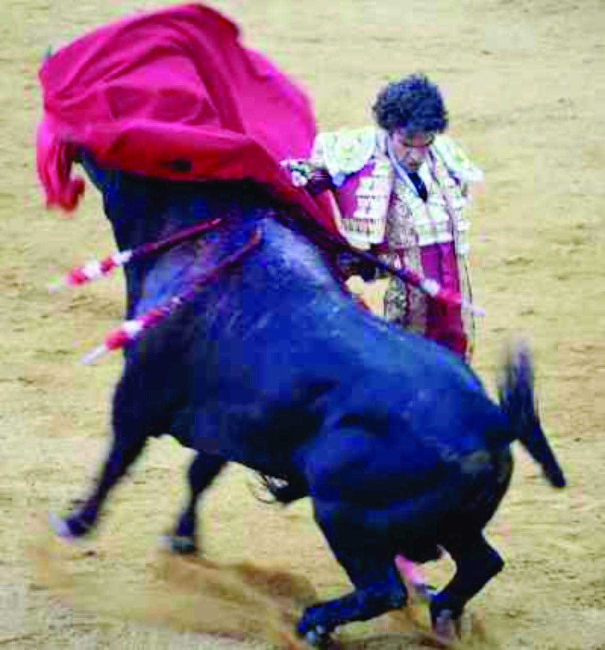 Sample Bullfighting Essay Giant Scholar Lisa Markkula