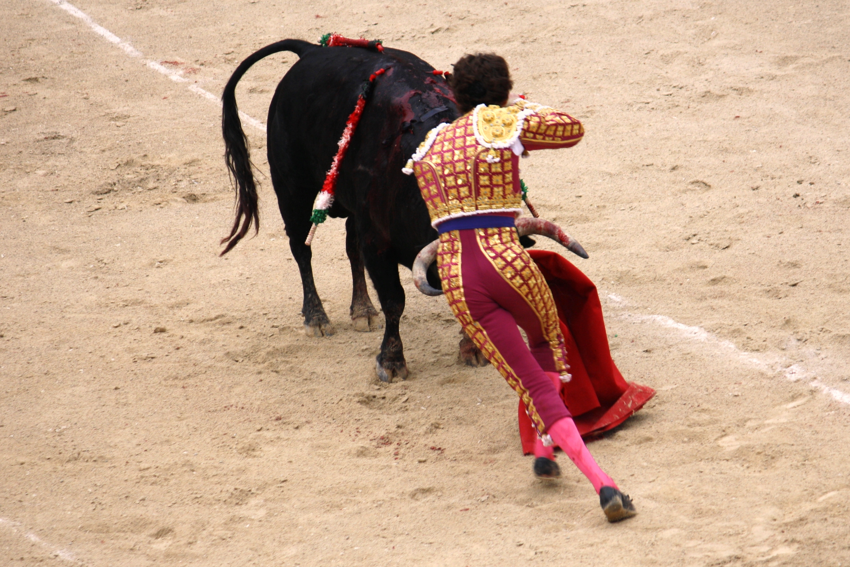 ethical questions about bullfighting Fans laid on a hero's welcome when jose tomas made a triumphal return to professional bullfighting in barcelona three years ago but society and notions of ethical treatment of animals have moved on it wasn't a question of animal suffering or animal abuse.