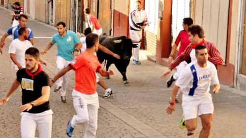 Alexander Fiske-Harrison running with the bulls - red jacket with white stripes on the right - in the last encierro of Cuéllar 2016 (Photo courtesy of Castilla y León Televisión)